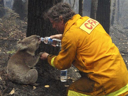 A firefighter stops to help a victim of the bushfires in Victoria